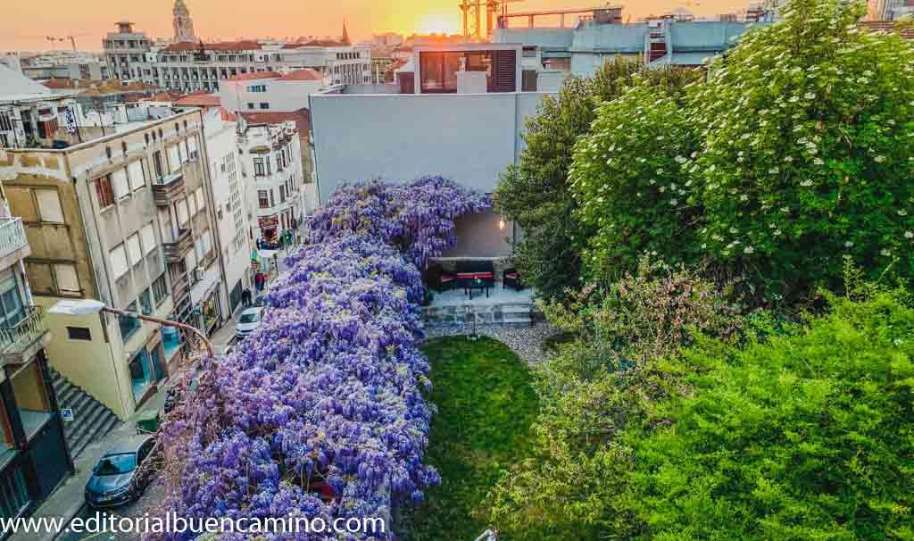 Urban Garden Porto Central Hostel