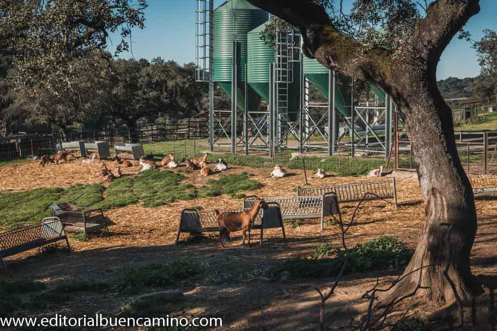 Actividad ganadera, agrícola y forestal